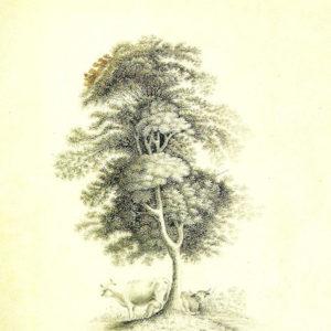 Árbol (I).|Hacia 1840. Grisalla y aguatinta. 18x12 cm. Museo Municipal de Bellas Artes. Santa Cruz de Tenerife