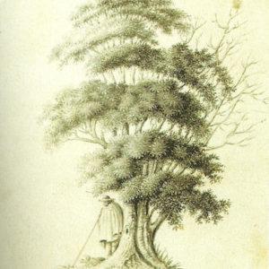 Árbol (II).|Hacia 1840. Grisalla y aguatinta 18x12 cm. Museo Municipal de Bellas Artes. Santa Cruz de Tenerife